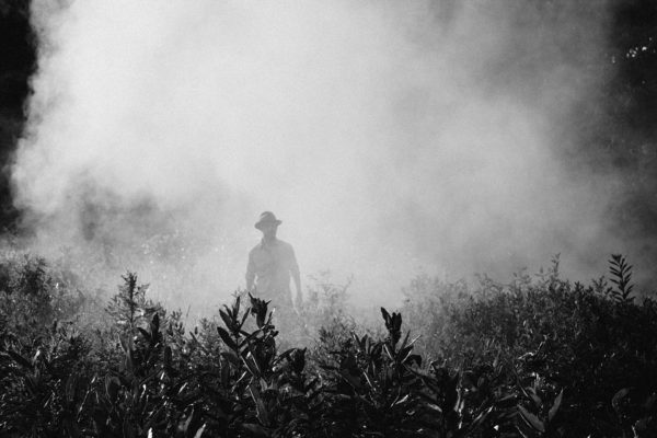 How pesticides affect your health and the environment