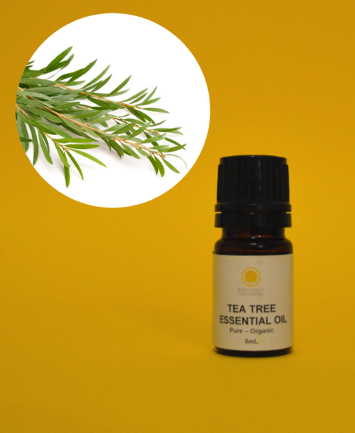 Tea Tree Essential Oil - Organic