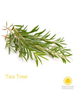 Tea Tree Essential Oil - Organic